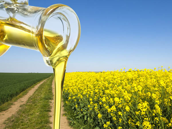 Edible Oil Oxidation Monitoring with microESR